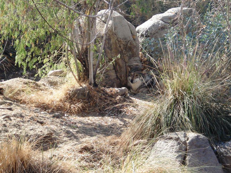 Desert 2009 054
