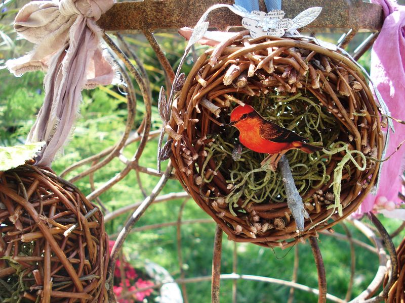 Nest 006